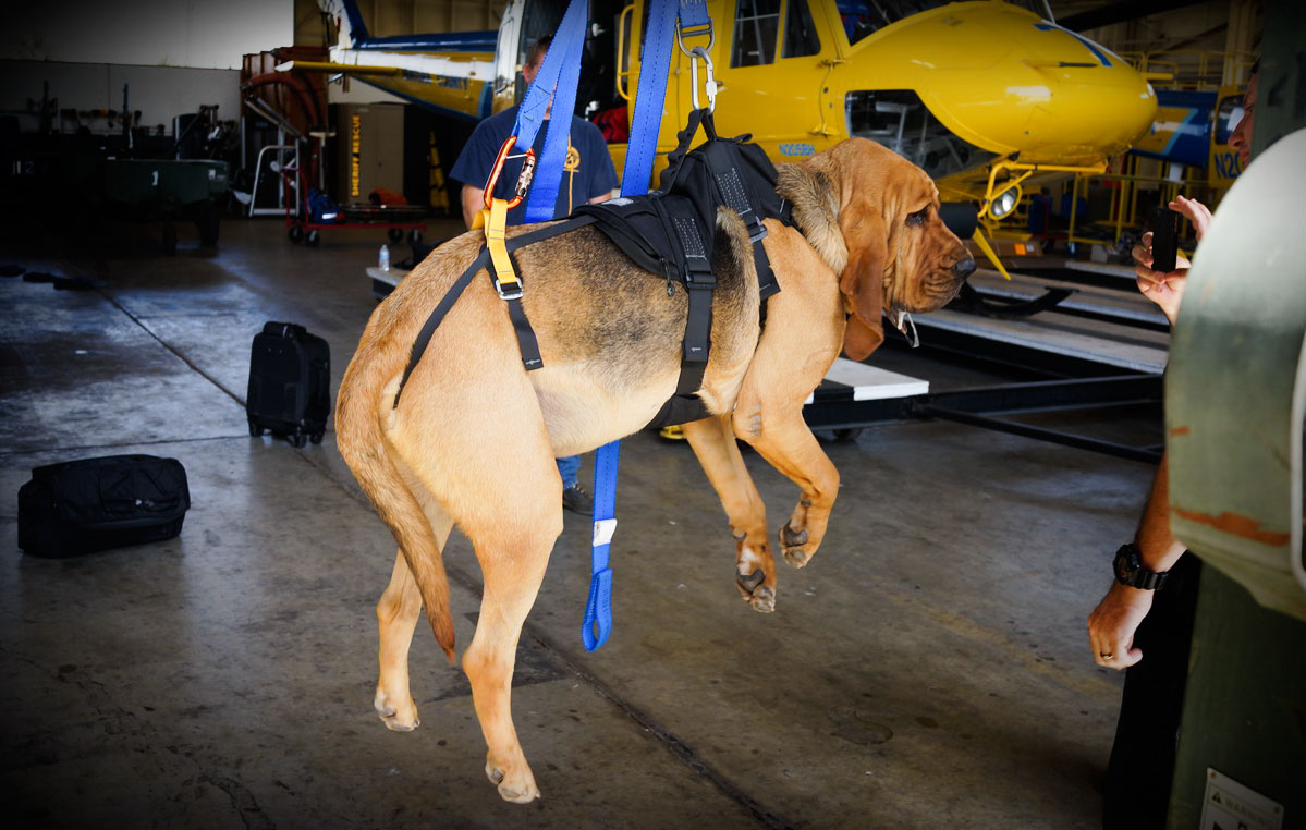 K9ProSeries_Testing1?ver=1519230156 k9 proseries rappel harness sar dog blog post cmc pro