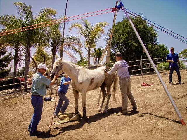 Horse Rescue Blog